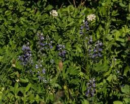 Flowers 2 MAIN