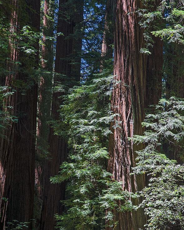 1 Redwoods MAIN, BLOG