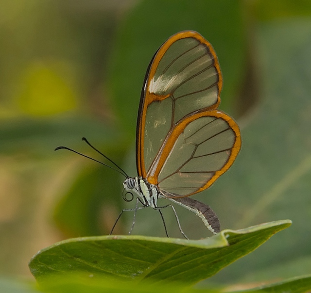 Glasswing BLOG, LPHOTO, CAPTURE, PHOTO OF DAY