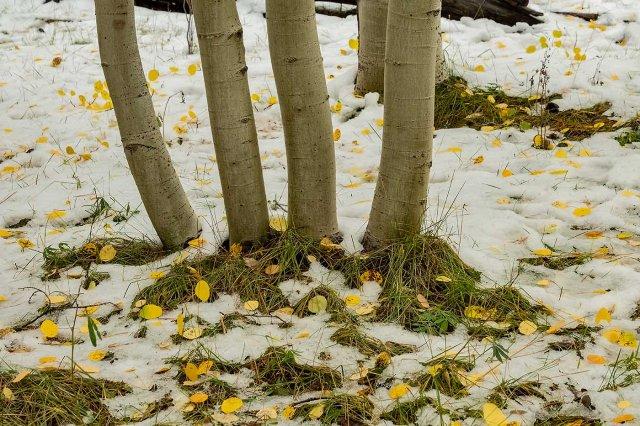 Snow Bowl MAIN, BLOG, PHOTO OF DAY