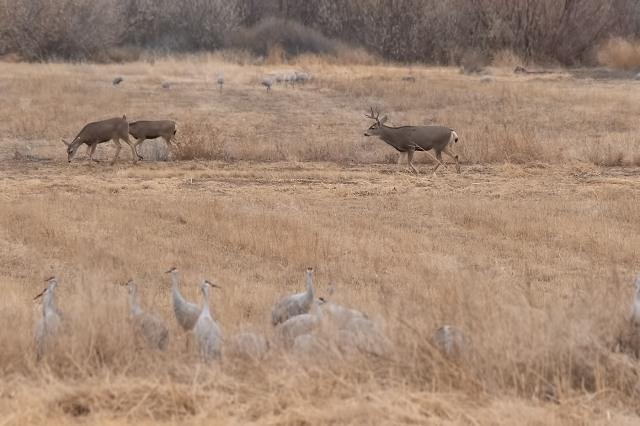 Deer MAIN, BLOG, LPHOTO