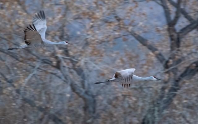 Home SWBIRDS, BLOG