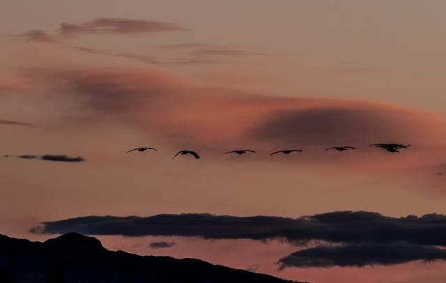 Pink Sunset BLOG, LPHOTO
