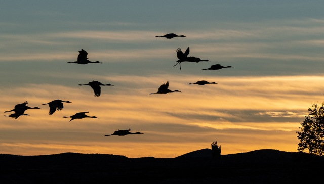 Sandhills 12-23-18 MAIN, SWBIRDS, WVC, BLOG