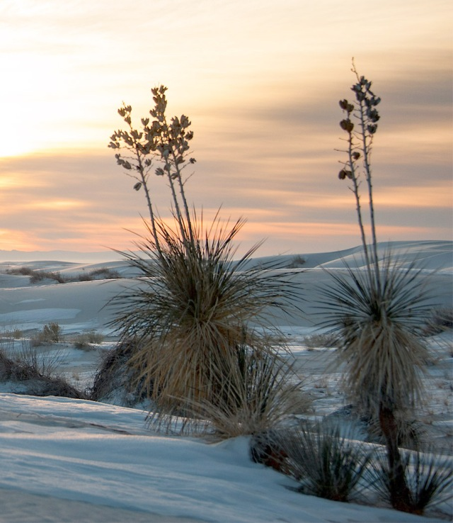 White Sands 1 MAIN BLOG, AZPHOTO
