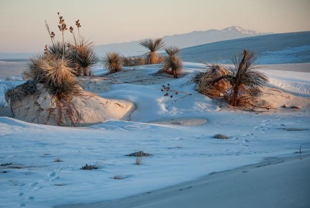 White Sands LPHOTO, BLOG