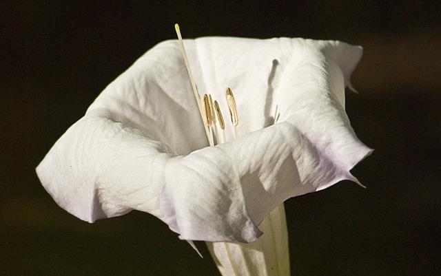 Wild Lily at the Garden LPHOTO, CAPTURE, BLOG