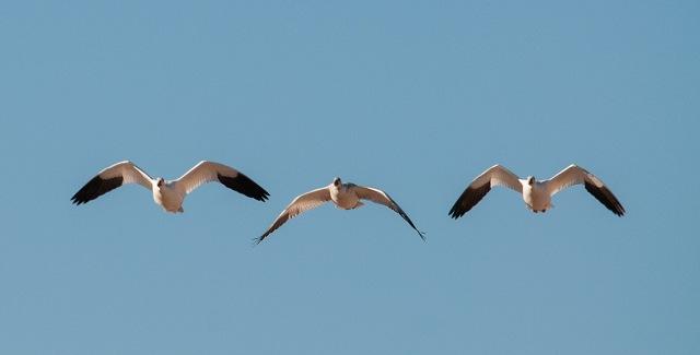 Bosque LPHOTO, SWBIRDS, BLOG