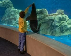Sea Lion 2 MAIN