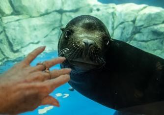 Seal 1 MAIN, BLOG