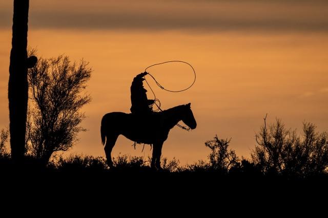 cowboy 1 blog, main, photo of day, azphotos