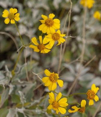 flowers 3 wildflowers, main, blog
