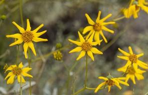 fowers 1 wildflowers, main, blog