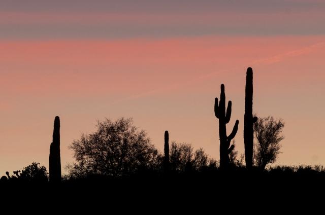 Sunrise AZPHOTO, MAIN, BLOG, CAPTURE, PHOTO OF DAY