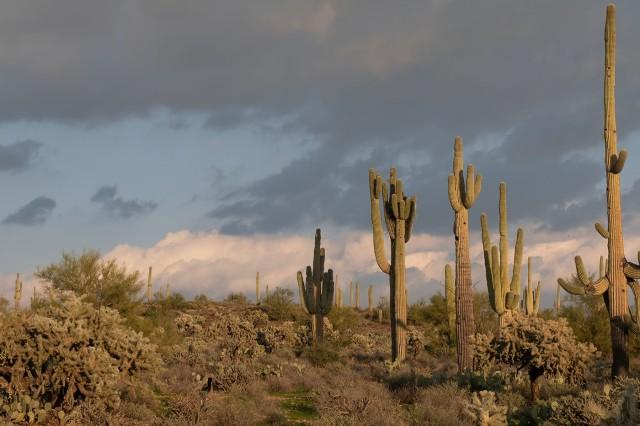 The desert MAIN, BLOG, PHOTO OF DAY, AZPHOTO