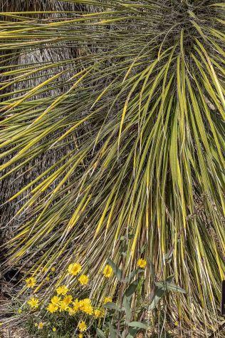Cactus 1 MAIN, BOG, PHOTO OF DAY, AZPHOTO