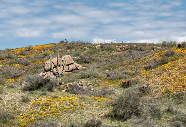 On The Way BLOG, PHOTO OF DAY, CATURE, AZ PHOTO