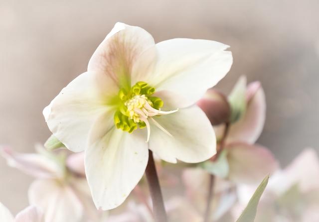 Flower 2 MAIN, BLOG,