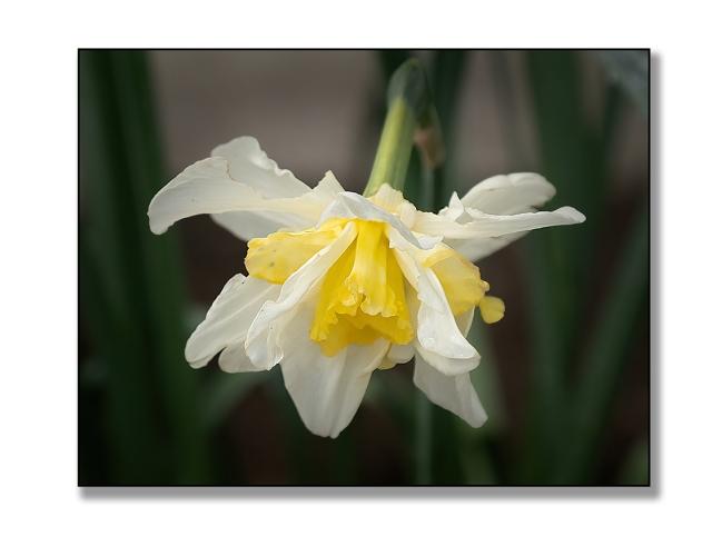 Flowers 3a BLOG, MAIN,