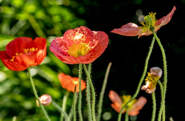 Flowers MAIN lPHOTO, BLOG