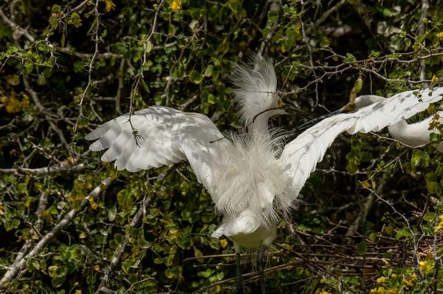 Snowy 2 SW BIRDS