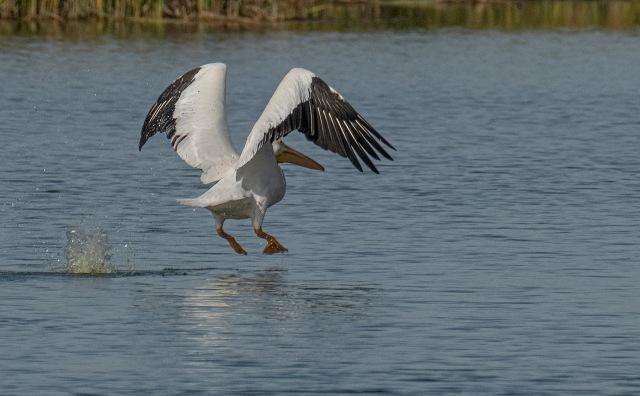 Pelican 3 BLOG, MAIN